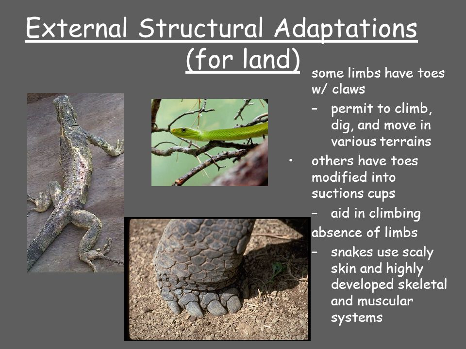 External Structural Adaptations (for land)