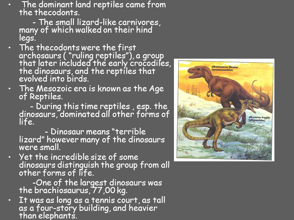 The dominant land reptiles came from the thecodonts.