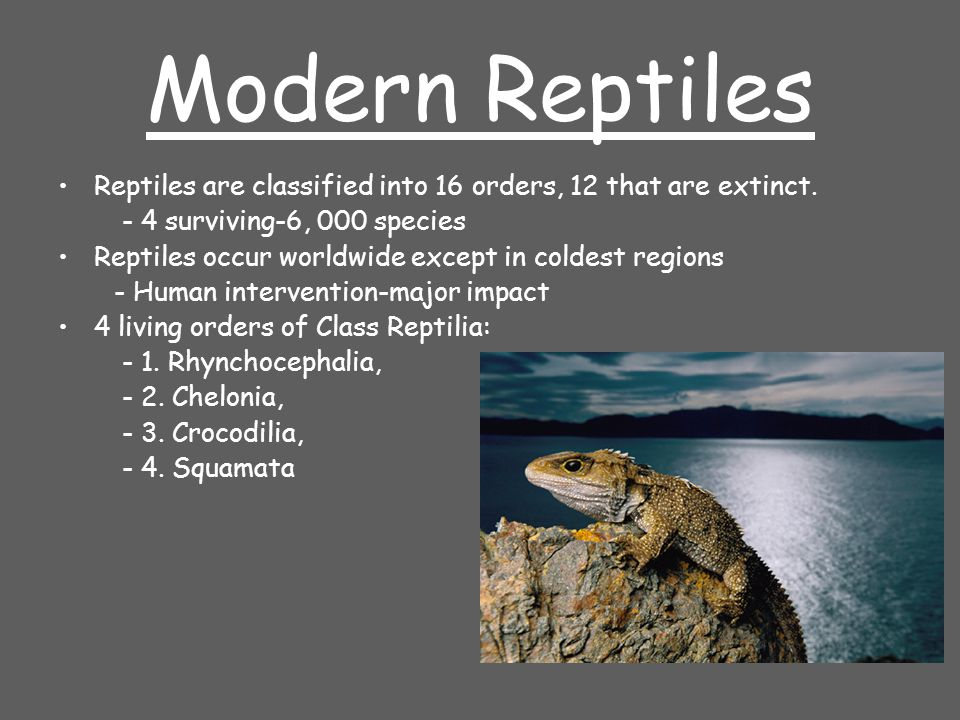 Modern Reptiles Reptiles are classified into 16 orders, 12 that are extinct. - 4 surviving-6, 000 species.