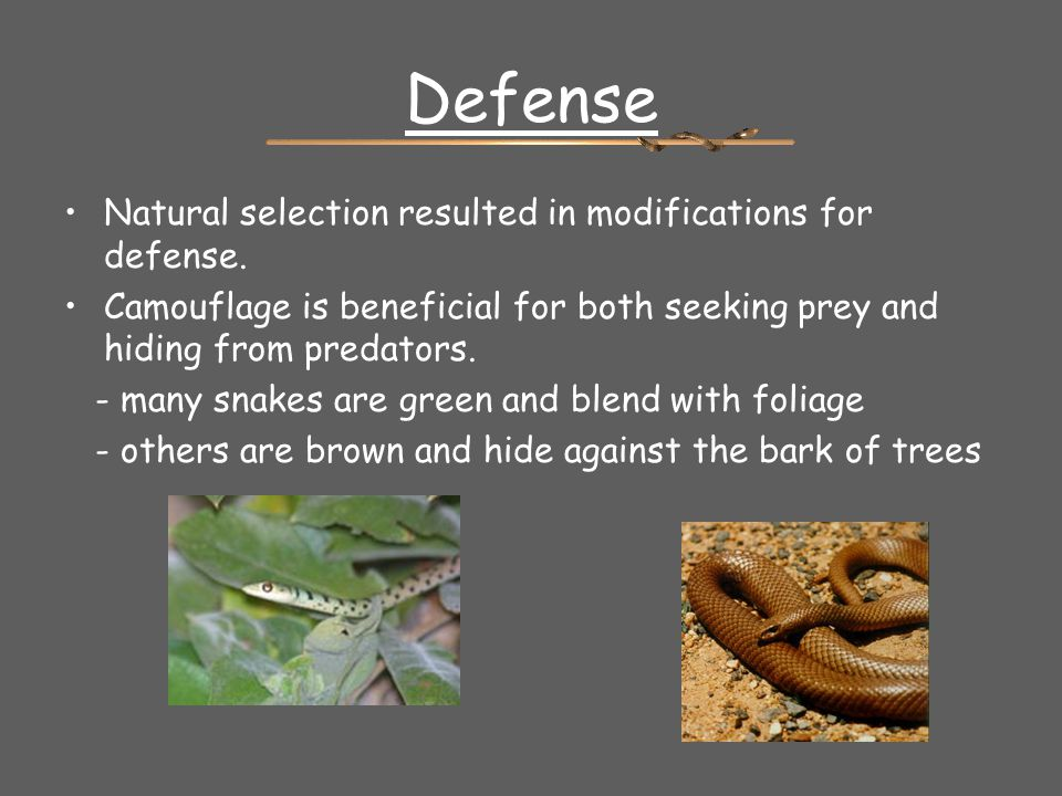 Defense Natural selection resulted in modifications for defense.