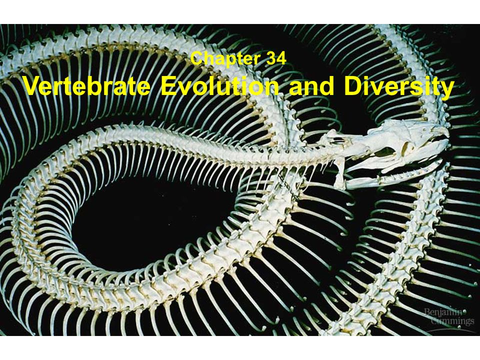 Vertebrate Evolution and Diversity