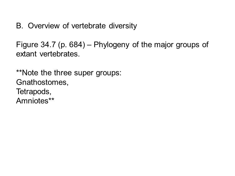 B. Overview of vertebrate diversity