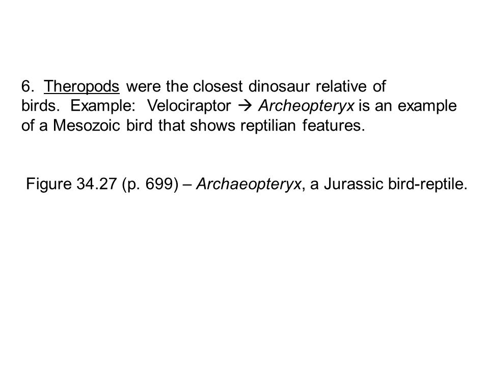 6. Theropods were the closest dinosaur relative of birds