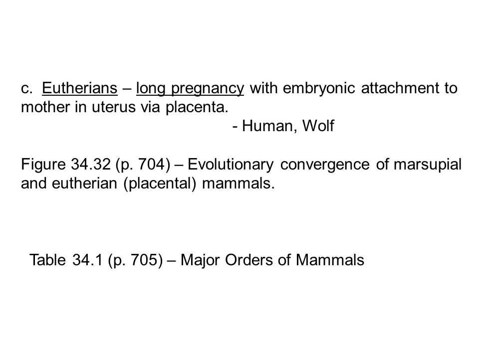 c. Eutherians – long pregnancy with embryonic attachment to mother in uterus via placenta.