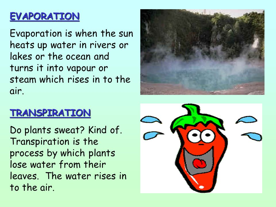 EVAPORATION Evaporation is when the sun heats up water in rivers or lakes or the ocean and turns it into vapour or steam which rises in to the air.