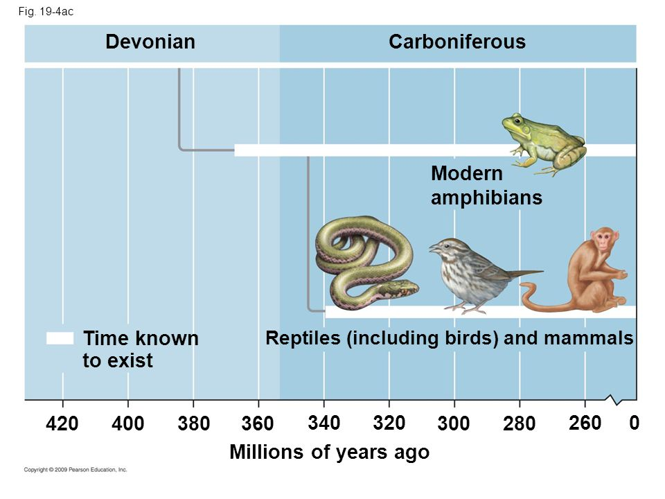 Devonian Carboniferous Modern amphibians Time known to exist 420 400