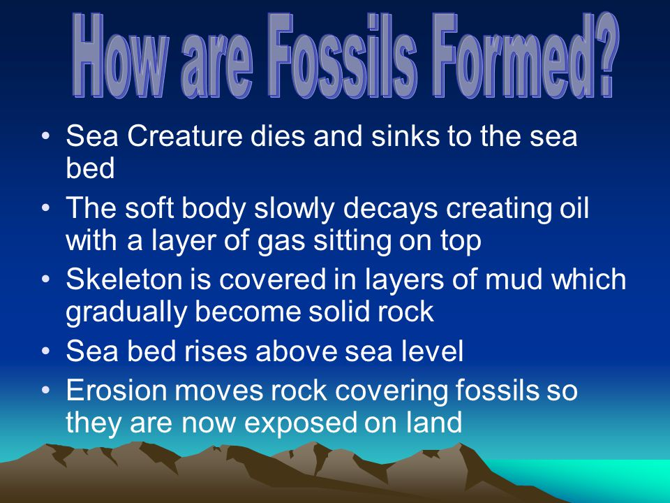 How are Fossils Formed Sea Creature dies and sinks to the sea bed