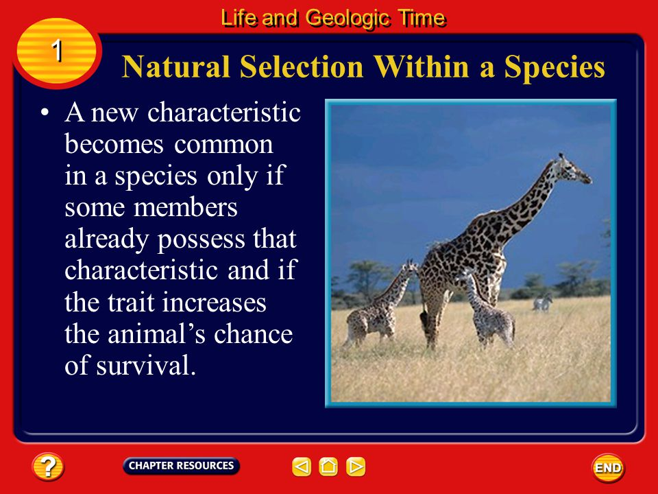 Natural Selection Within a Species