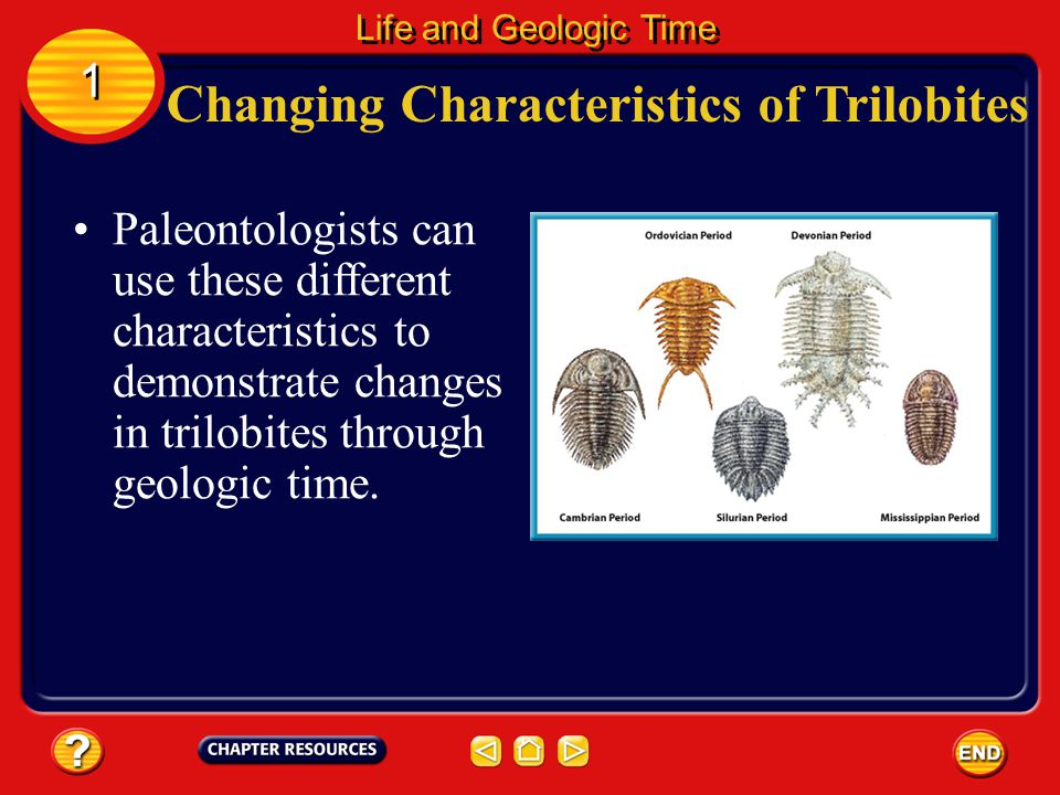 Changing Characteristics of Trilobites