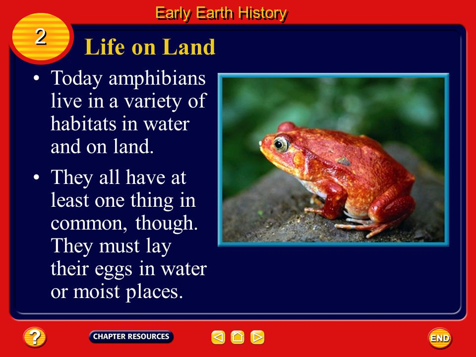Early Earth History 2. Life on Land. Today amphibians live in a variety of habitats in water and on land.