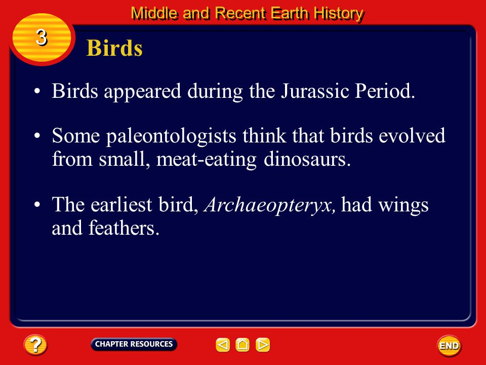 Birds 3 Birds appeared during the Jurassic Period.