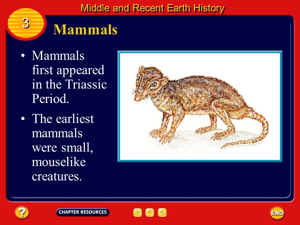 Mammals 3 Mammals first appeared in the Triassic Period.