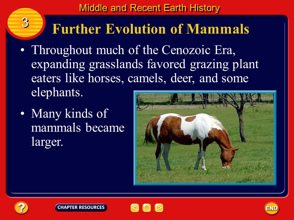 Further Evolution of Mammals