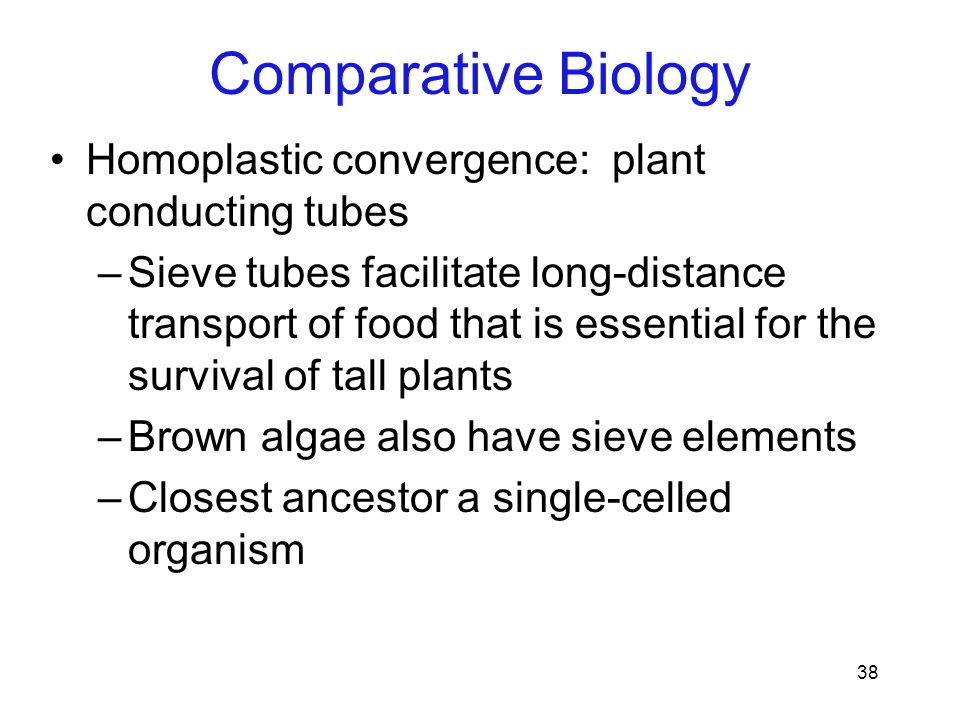 Comparative Biology Homoplastic convergence: plant conducting tubes
