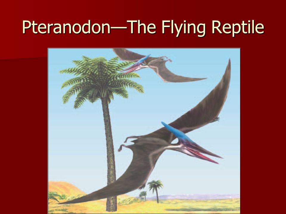 Pteranodon—The Flying Reptile