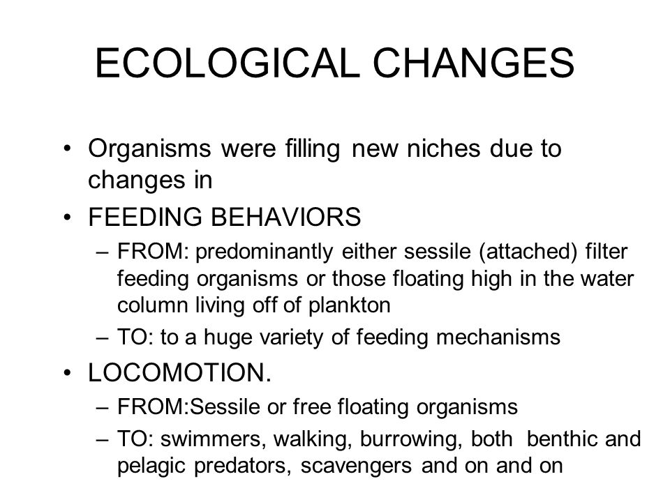 ECOLOGICAL CHANGES Organisms were filling new niches due to changes in
