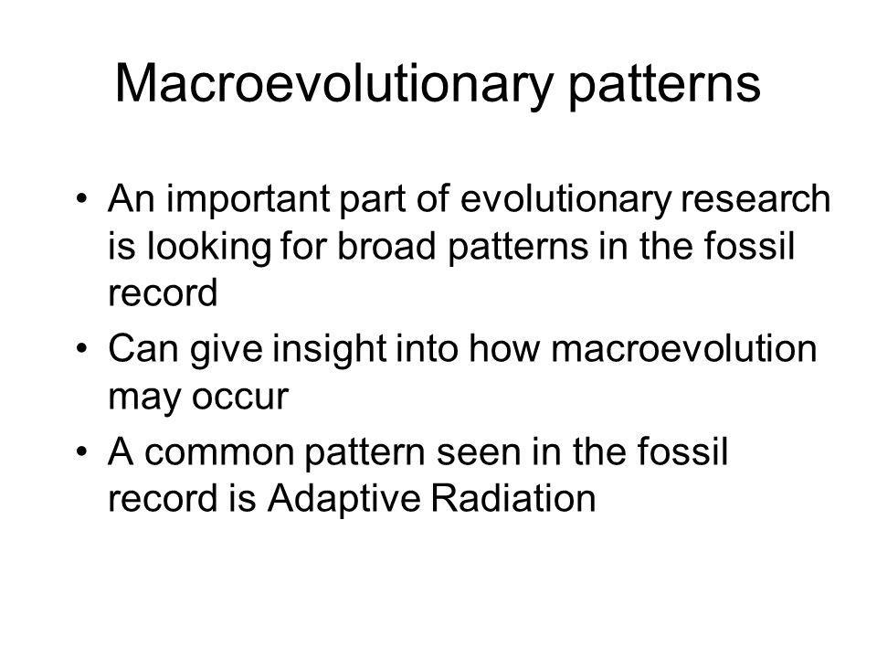 Macroevolutionary patterns