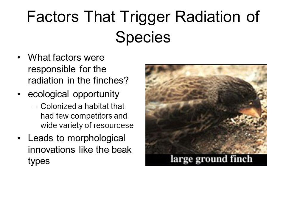 Factors That Trigger Radiation of Species