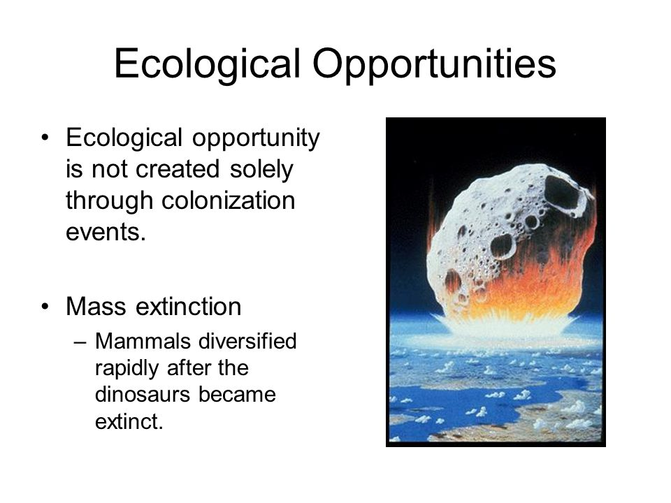 Ecological Opportunities