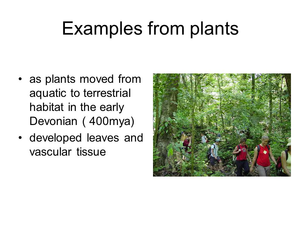 Examples from plants as plants moved from aquatic to terrestrial habitat in the early Devonian ( 400mya)