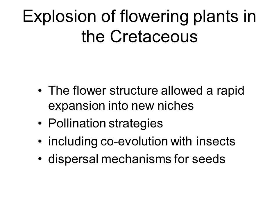 Explosion of flowering plants in the Cretaceous