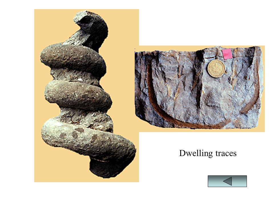 Dwelling traces