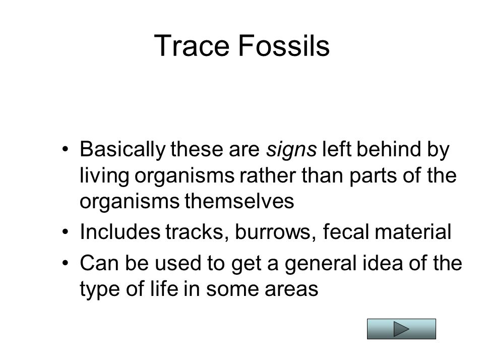 Trace Fossils Basically these are signs left behind by living organisms rather than parts of the organisms themselves.