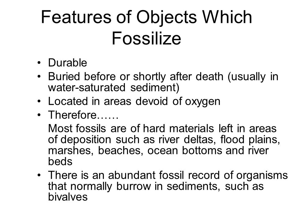 Features of Objects Which Fossilize