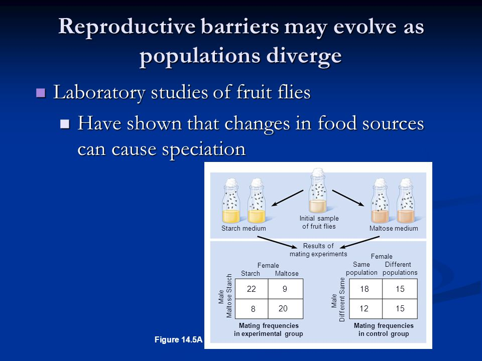 Reproductive barriers may evolve as populations diverge