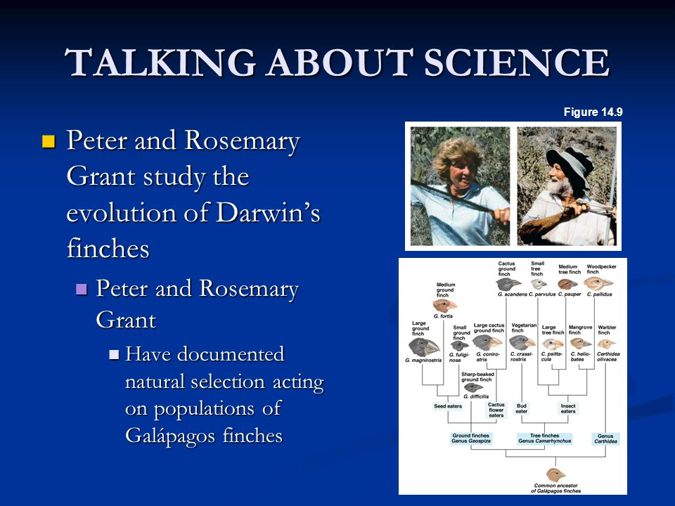 TALKING ABOUT SCIENCE Figure 14.9. Peter and Rosemary Grant study the evolution of Darwin's finches.