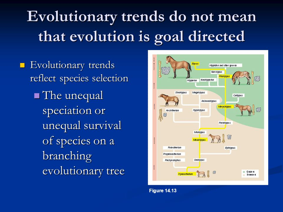 Evolutionary trends do not mean that evolution is goal directed