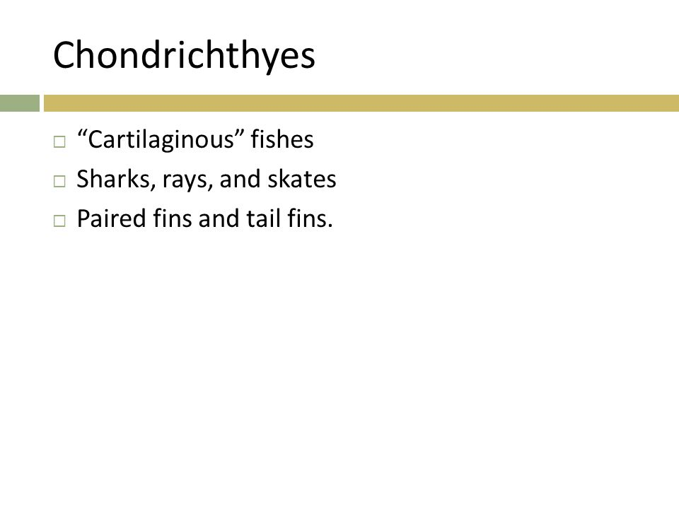 Chondrichthyes Cartilaginous fishes Sharks, rays, and skates