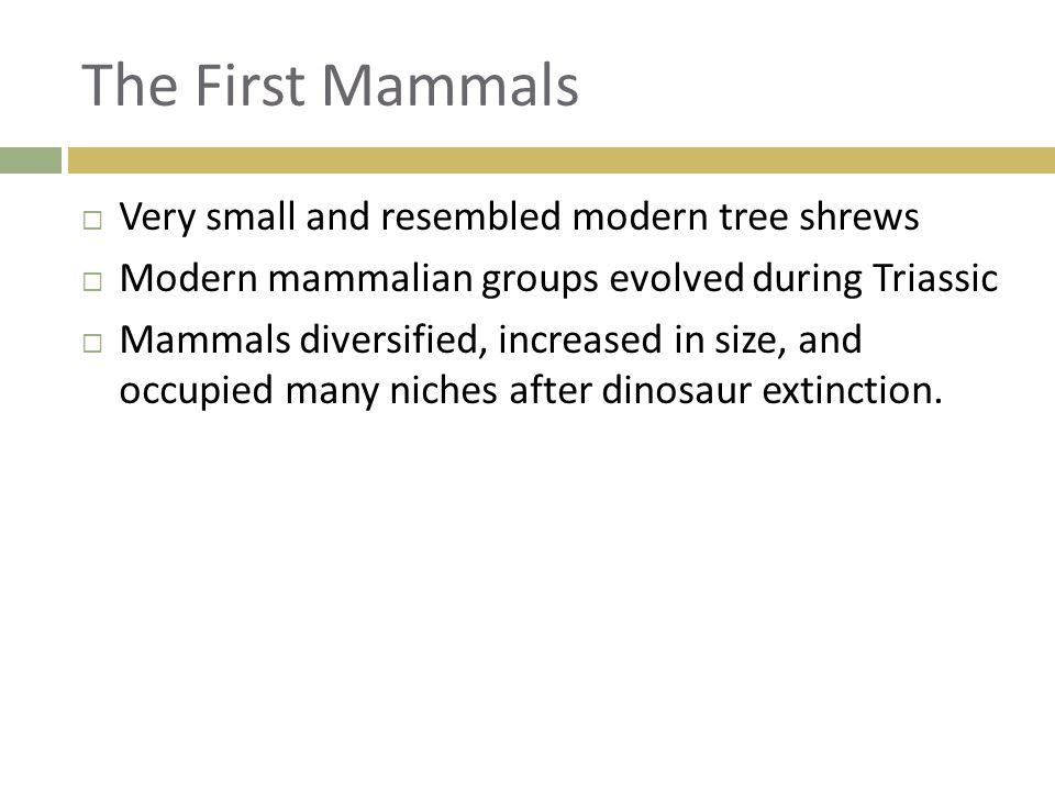 The First Mammals Very small and resembled modern tree shrews