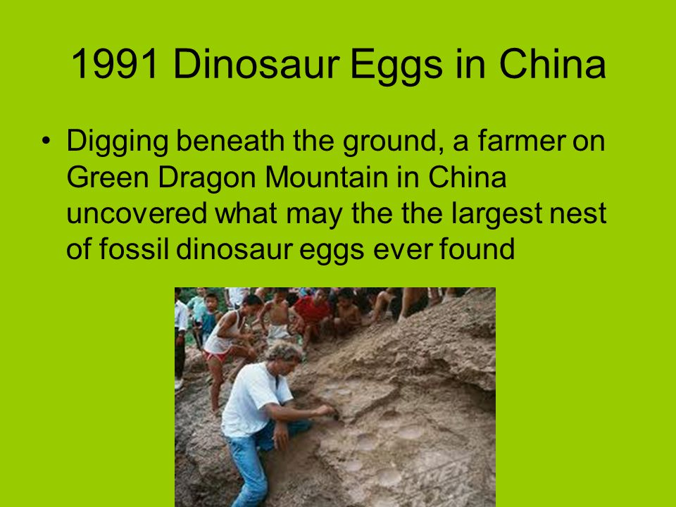 1991 Dinosaur Eggs in China
