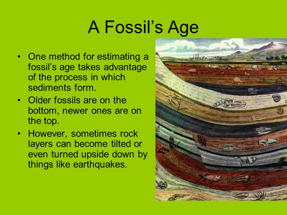 A Fossil's Age One method for estimating a fossil's age takes advantage of the process in which sediments form.