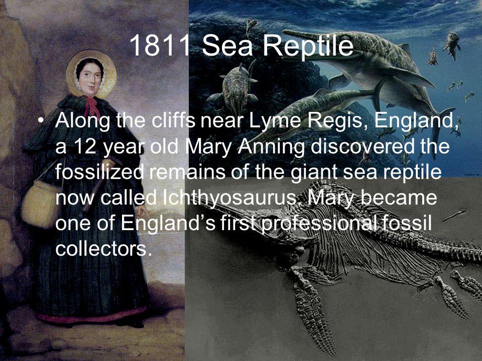 1811 Sea Reptile