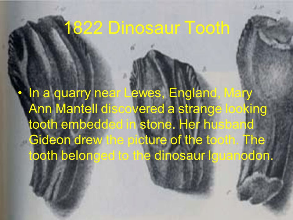 1822 Dinosaur Tooth