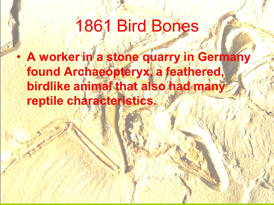 1861 Bird Bones A worker in a stone quarry in Germany found Archaeopteryx, a feathered, birdlike animal that also had many reptile characteristics.