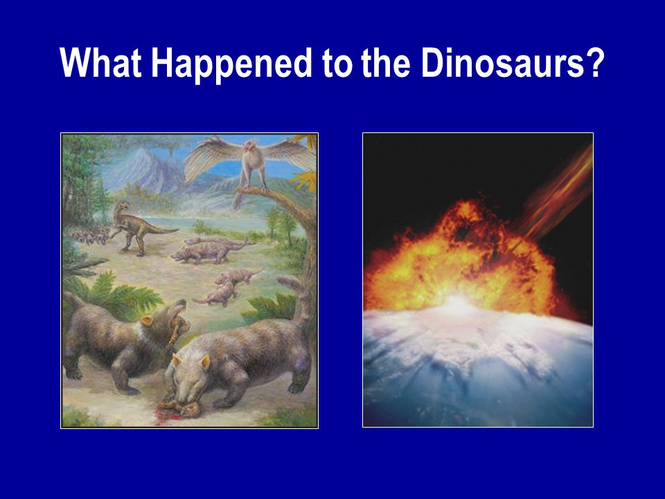 What Happened to the Dinosaurs