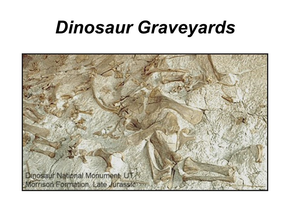 Dinosaur Graveyards