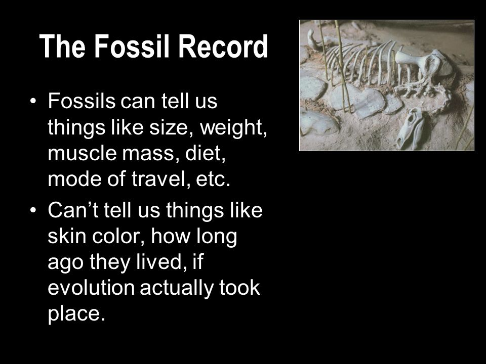 The Fossil Record Fossils can tell us things like size, weight, muscle mass, diet, mode of travel, etc.
