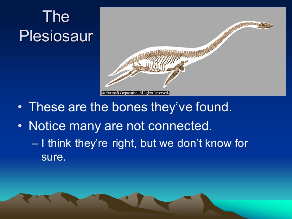 The Plesiosaur These are the bones they've found.
