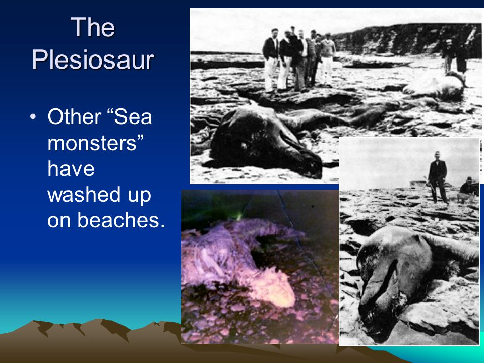 The Plesiosaur Other Sea monsters have washed up on beaches.