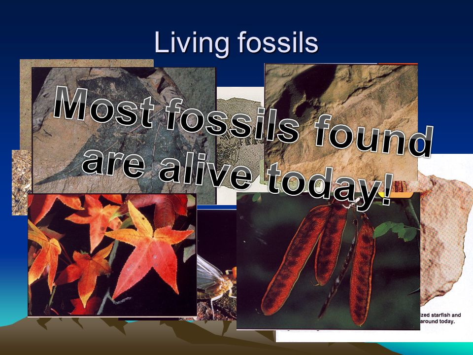 Most fossils found are alive today!