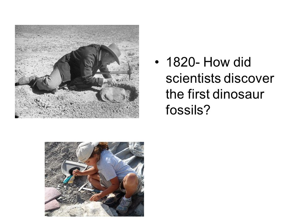 1820- How did scientists discover the first dinosaur fossils