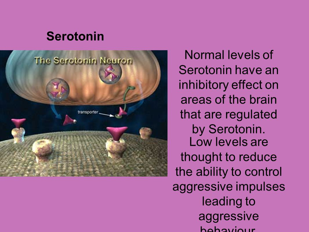 Serotonin Normal levels of Serotonin have an inhibitory effect on areas of the brain that are regulated by Serotonin.