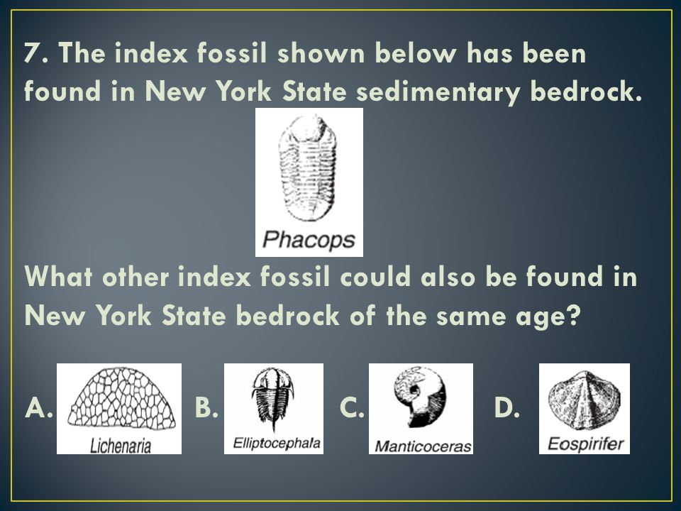 7. The index fossil shown below has been found in New York State sedimentary bedrock.