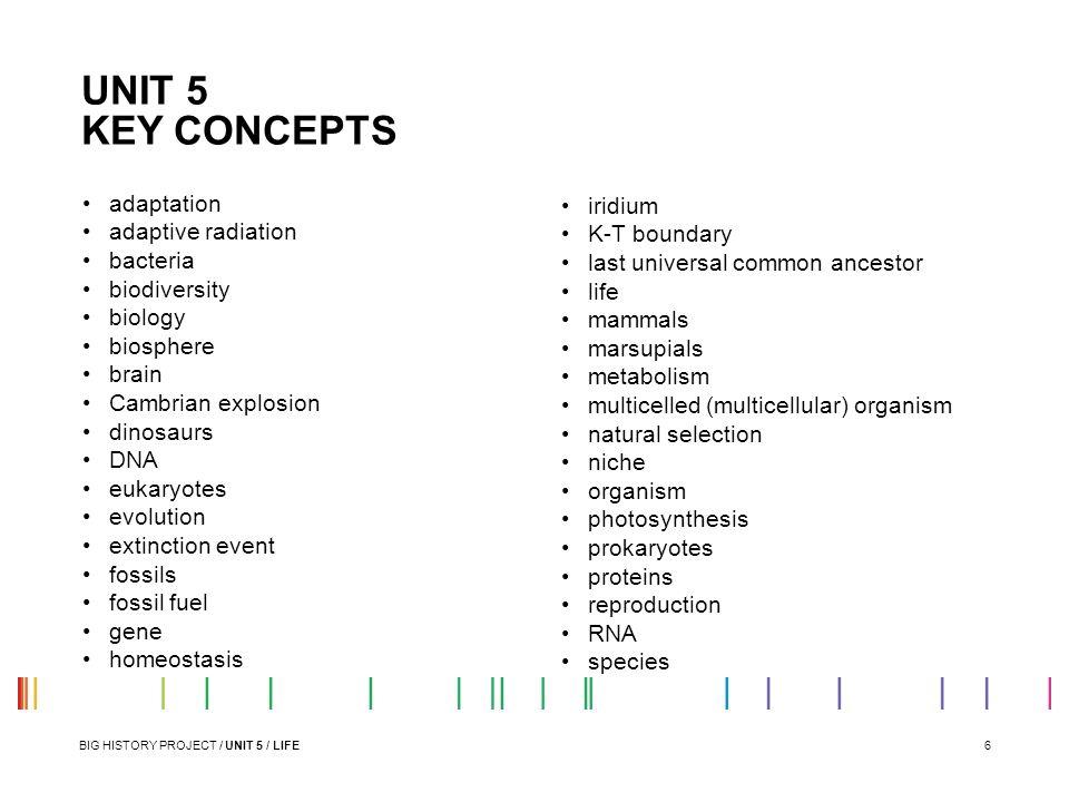 UNIT 5 KEY CONCEPTS adaptation iridium adaptive radiation K-T boundary