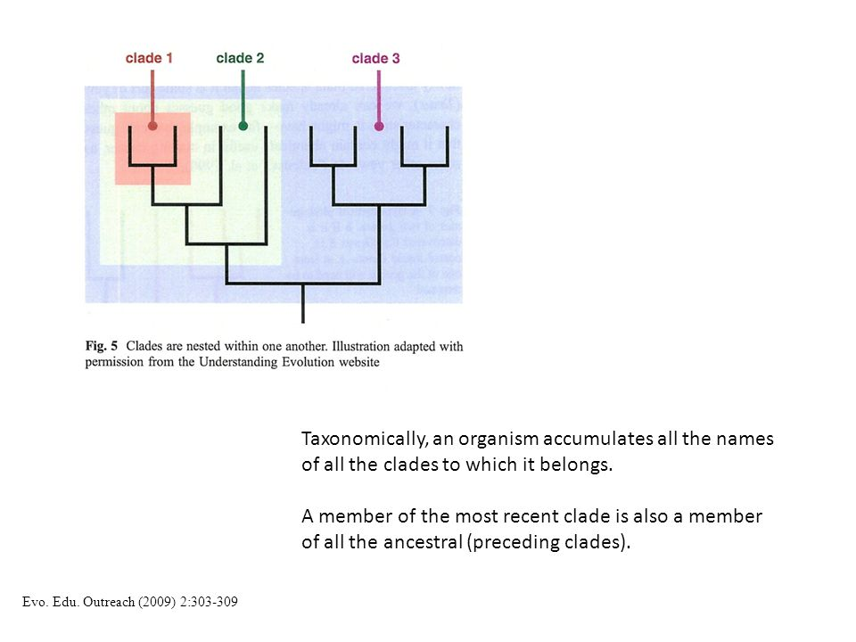 Taxonomically, an organism accumulates all the names of all the clades to which it belongs.