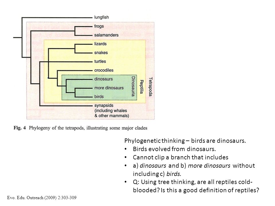 Phylogenetic thinking – birds are dinosaurs.